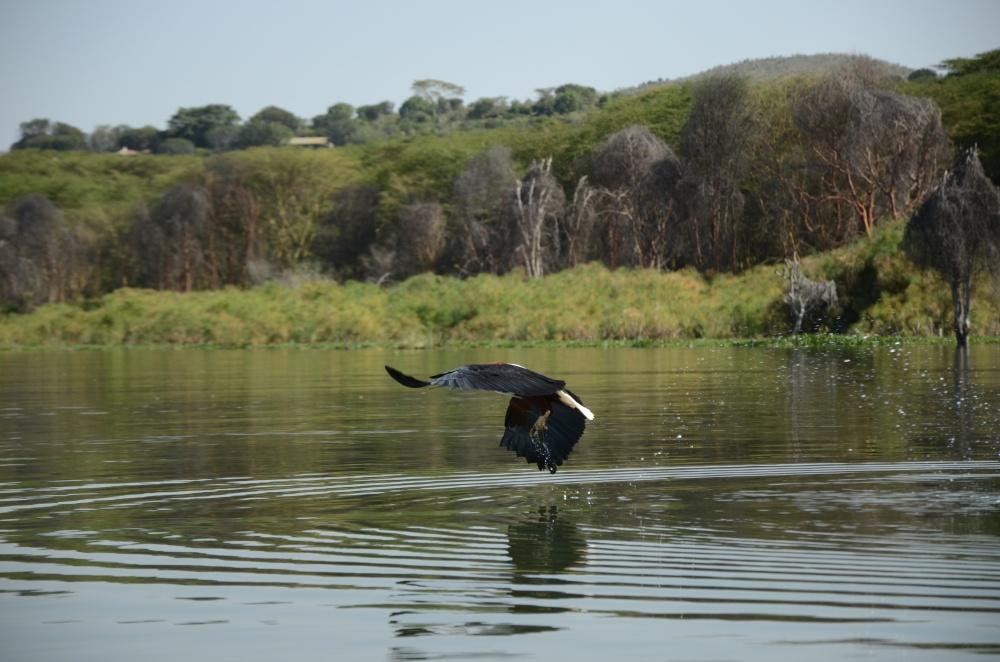 Lake Naivasha (8)